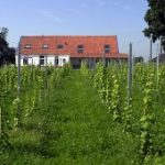 bb-de-wijnstaete